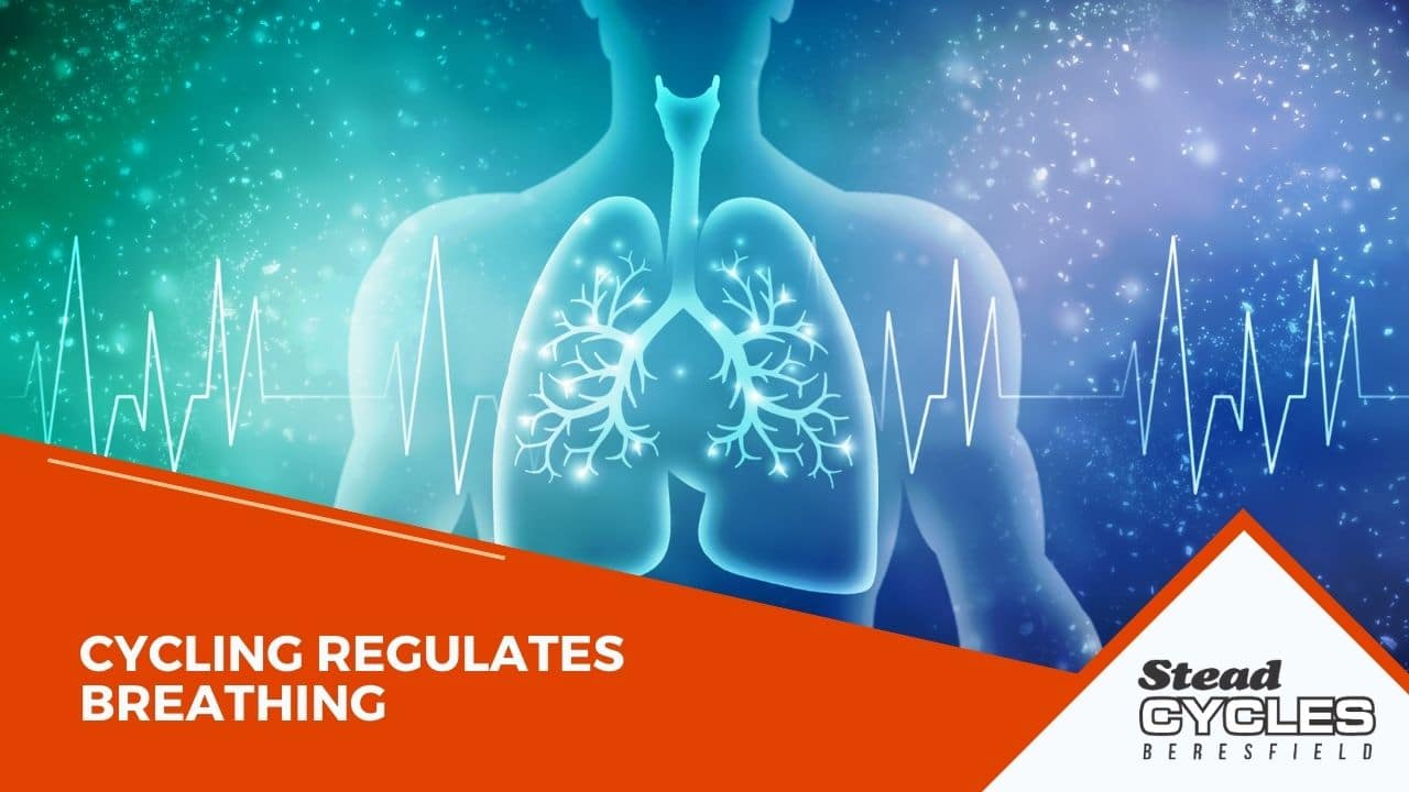 Cycling Regulates Breathing