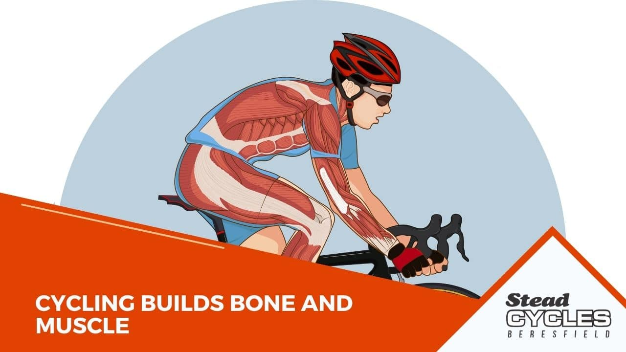 Cycling Builds Bone and Muscle